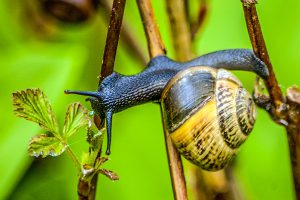 Unsere Vorbilder in der Natur